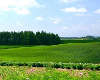 Купить, арендовать земельный участок